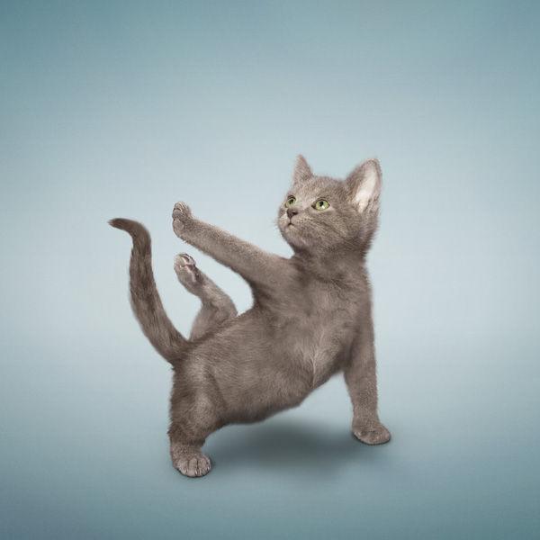 Yoga-Cats-10