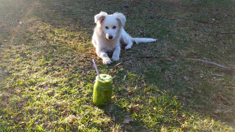 Snow aka little bear, likes photo bombing with my smoothies. She's starting to like them.