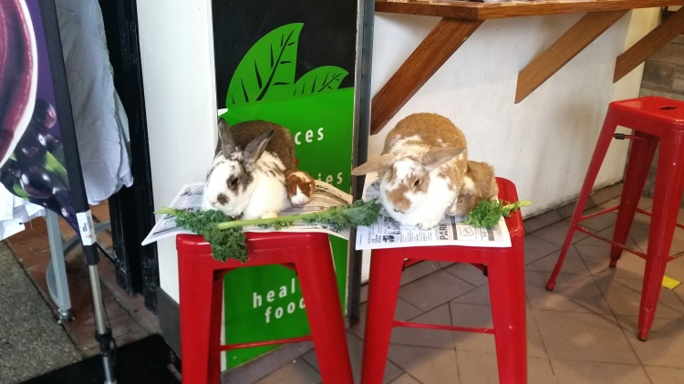 Regular customers at a local juice bar.